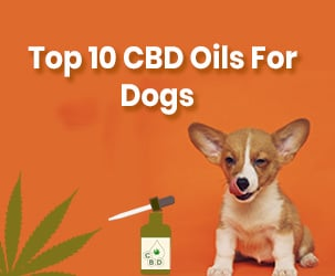 Best CBD Oils for Dogs