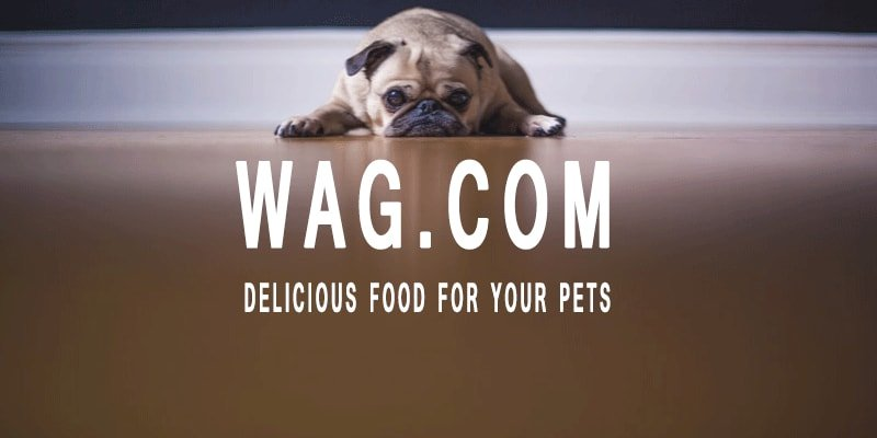 Wag.Com Review - Get Everything for Your Pets Here