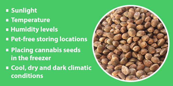 Cannabis Seeds Storage Conditions